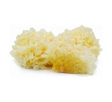 Белый древесный гриб (инъер, коралловый, серебряные ушки) сушеные
